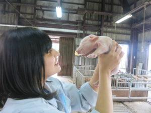 肉畜コースの3年生が管理を行いました。