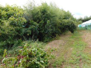 【果樹コース】 果樹園内の環境整備