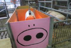 【子豚の保育箱が完成しました!】