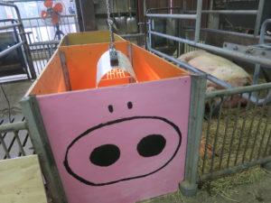 10月7日に生まれた子豚から使用してます!