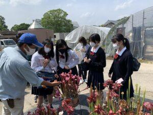 食虫植物モウセンゴケプロジェクト