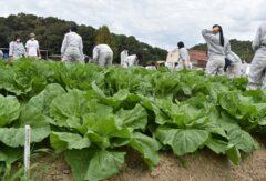 1年生 農業と環境 ハクサイの追肥